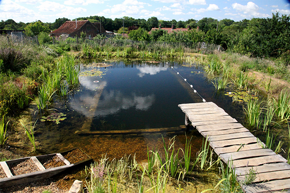 biotop and its partner network in the u s backyard natural pools